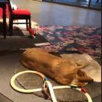 อบอุ่นใจ IKEA เปิดร้านให้สุนัขจรจัดเข้านอน ได้พักพิงกายในวันที่หนาวเหน็บ